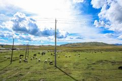 Ruoergai grässlätt, Xiahe, Gannan, Kina arkivbild