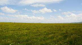 Ruoergai Grassland Royalty Free Stock Photo