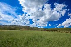 Ruoergai-Wiese, Xiahe, Gannan, China lizenzfreie stockfotos