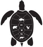Ruota della medicina della tartaruga Immagini Stock
