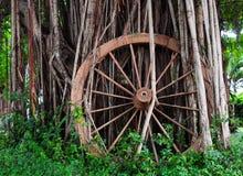 Ruota di legno Fotografie Stock Libere da Diritti