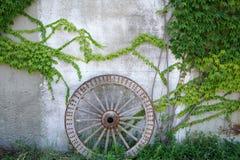 Ruota di legno antica del carretto con le foglie verdi Fotografie Stock Libere da Diritti