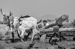 Ruota idraulica antica nel Gujarat, India Fotografie Stock