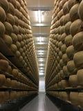 Ruote del formaggio che maturano nella cantina del formaggio Immagine Stock Libera da Diritti