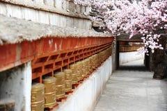 Ruote di preghiera religiose e bello fiore dell'albicocca immagini stock