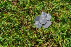 Rupiah coin money on green grass. Multiple Thousand Indonesia Rupiah coin money on a green grass Royalty Free Stock Photos