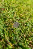 Rupiah coin money on green grass. Thousand Indonesia Rupiah coin money on green grass vertical background Stock Images