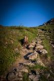 Rupicapra Rupicapra принятый над горой Giewont Zakopane Польшей Стоковые Изображения RF