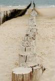 Rupteurs de mer Image libre de droits