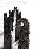 Rupteurs de plage avec des bigorneaux photo libre de droits