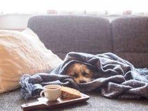 Ruptura de café com pouco cão em um sofá fotografia de stock royalty free