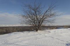 Ruptura próxima da árvore Foto de Stock Royalty Free