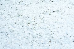 Rupturas da grama verde através da neve branca O gramado verde apareceu de debaixo da neve fotos de stock