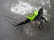 Rupturas verdes do broto através do asfalto imagem de stock