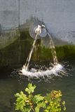 rura liści, Obrazy Royalty Free