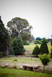 Rural. Trees, grass, sky and a place to sit Royalty Free Stock Photography