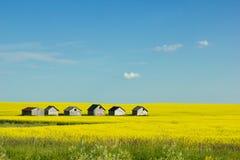 rural Fotografia de Stock Royalty Free