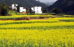 rural Imagem de Stock