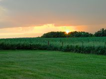 Iowa. Farm field in the summer stock image