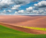 Rural agricultural landscape, field on background sky Stock Image
