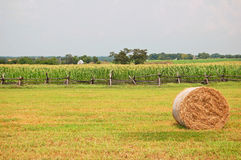 Rural agricultural scene Royalty Free Stock Photography