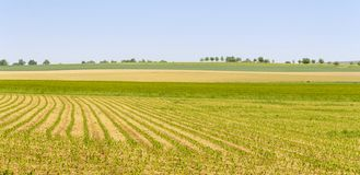Agricultural scenery at spring time Stock Photo