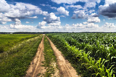 Rural agriculture farming landscape Stock Images