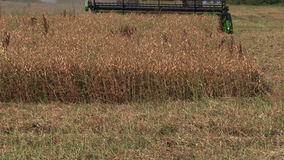 Rural agriculture machinery combine on corn grain field stock video