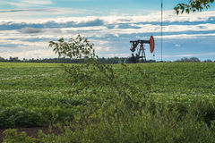 Rural Alberta: Oil Pump jack in the middle of potato field Stock Image
