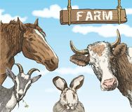 Rural animals Stock Images