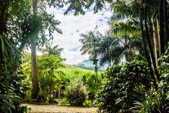 Landscape in Alto Jequitibá, Minas Gerais, Brasil. Rural area of Alto Jequitibá, State of Minas Gerais, Brazil. A rugged, agricultural region, 400 stock images
