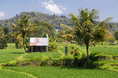 Rural area in Bali,  Indonesia Royalty Free Stock Image