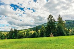 Rural area in carpathian mountains. Cloudy september weather. row of threes behid the green grassy meadow with haystacks. wonderful countryside scenery stock images