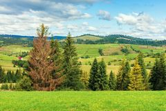 Rural area in carpathian mountains. Cloudy september weather. row of threes behid the green grassy meadow. village in the distant valley. wonderful countryside stock photography