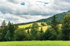 Rural area in carpathian mountains. Cloudy september weather. row of threes behid the green grassy meadow. wonderful countryside scenery stock photo