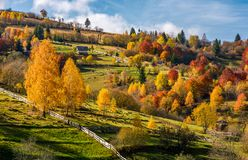 Rural area on hillside in autumn. Spectacular countryside scenery with yellow trees, fences and fields in fine weather condition Stock Images