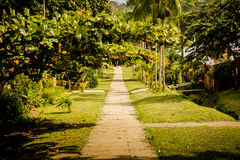 Rural asphalt road through the green field in the jungle Stock Image