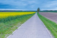 Rural asphalt road near fields in springtime. Royalty Free Stock Photography