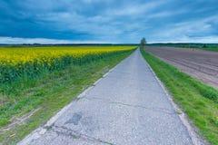 Rural asphalt road near fields in springtime Stock Photos
