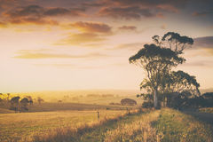 Rural Australia farmland. Rural evening sunset in countryside in South Gippsland, Australia stock photo