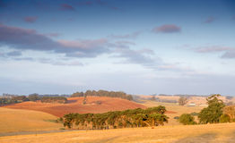 Rural Australia farmland. Rural evening sunset in countryside in South Gippsland, Australia Stock Images