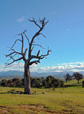 Rural Australian Landscape. Against blue sky Stock Photo