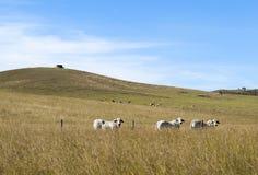 Rural Australian Landscape Royalty Free Stock Photos