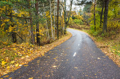 Rural autumn landscape with asphalt road Royalty Free Stock Photo