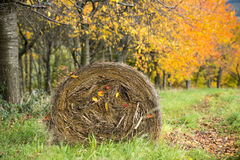 Rural autumn landscape with colored trees and stack of hay, Germany Stock Photo