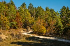 Rural autumn landscape with a dirt road. Among forest Royalty Free Stock Images