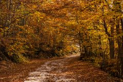 Rural autumn landscape with a dirt road. Among forest Stock Photos