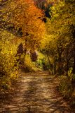 Rural autumn landscape with a dirt road. Among forest Royalty Free Stock Photos