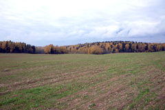 Rural autumn landscape with a field and forest on cloudy day Stock Photo