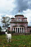 Rural autumn landscape. With grazing goat near old church Stock Photos